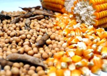 Plantio de milho e soja